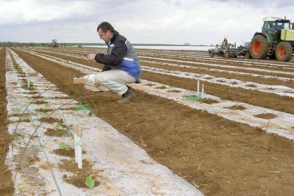 pilotage d'irrigation du melon et installation de sondes watermark